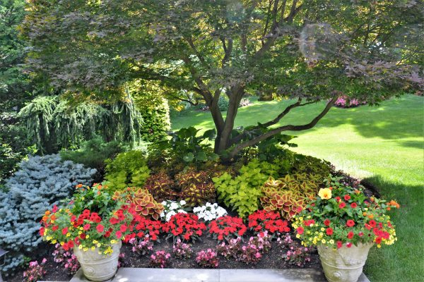 Summer Container Gardens to Enhance Your Home