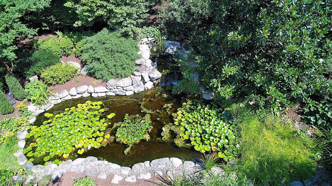 Garden with pond design NJ