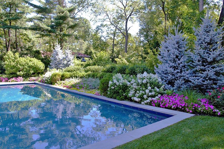 Pool Landscape Screening Design