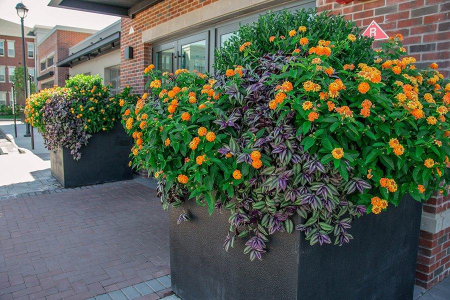 Seasonal Commercial Planters
