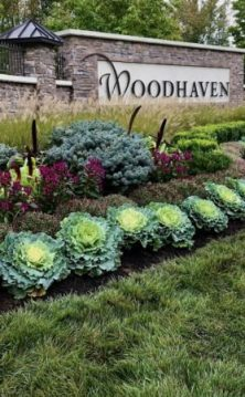 best-perennials-to-plant-in-the-fall