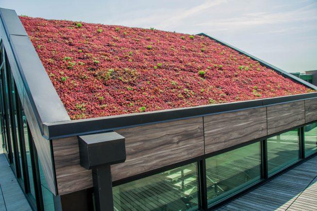 Living Roof Design, NJ