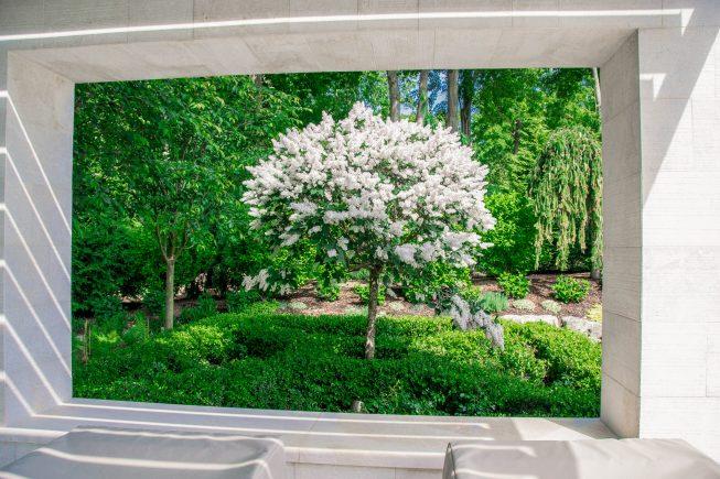 Pergola window framing the lilac tree