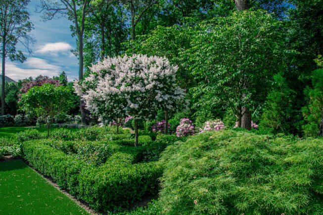 Lilac Tree Garden